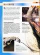 Рептилии. Энциклопедия для школьников
